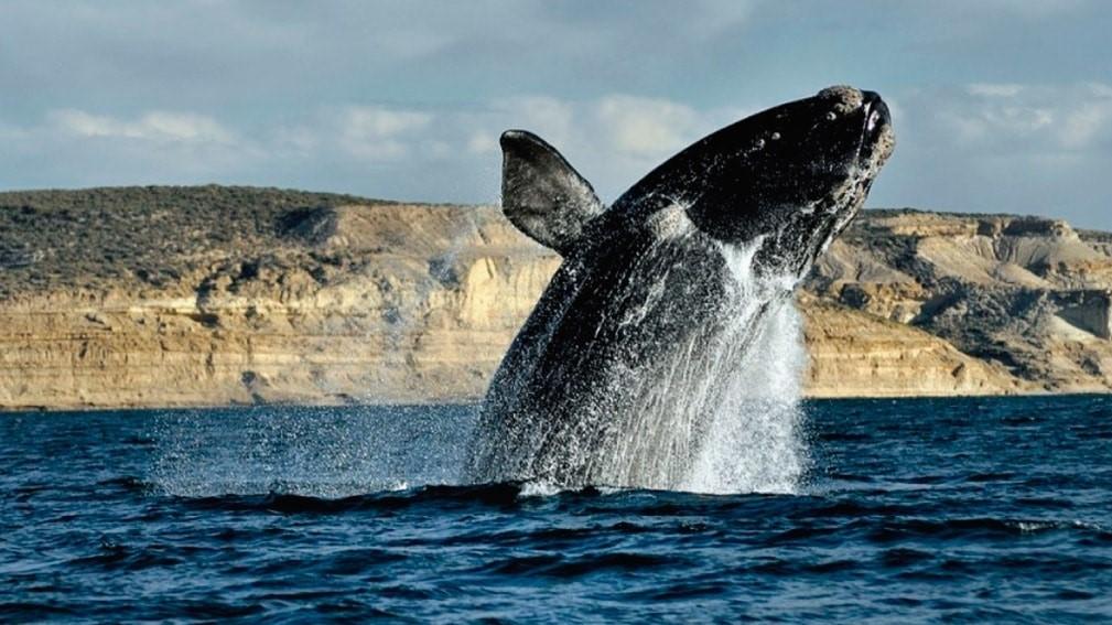 puerto-madryn-calafate-ushuaia